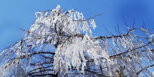 千树万树银花开 崂山巨峰现冰挂奇观