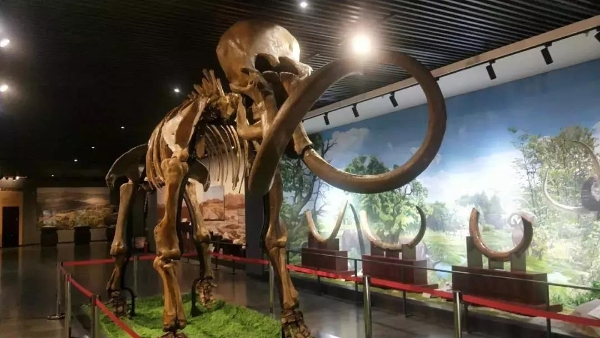 库伦旗博物馆古生物化石展厅正式对外开放